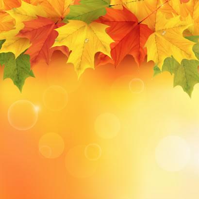 紅葉,もみじ,カエデ,背景イメージ ベクターイラスト素材